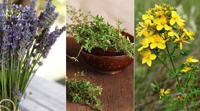 Gyógyító természet: 7 csodás gyógynövény