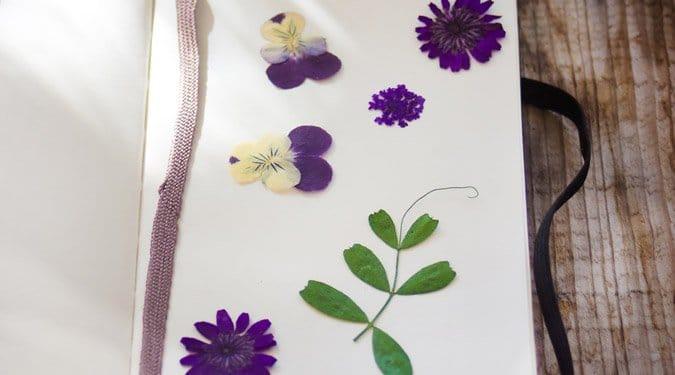 Gyönyörű préselt virágok – Így préseld le a nyár színeit!