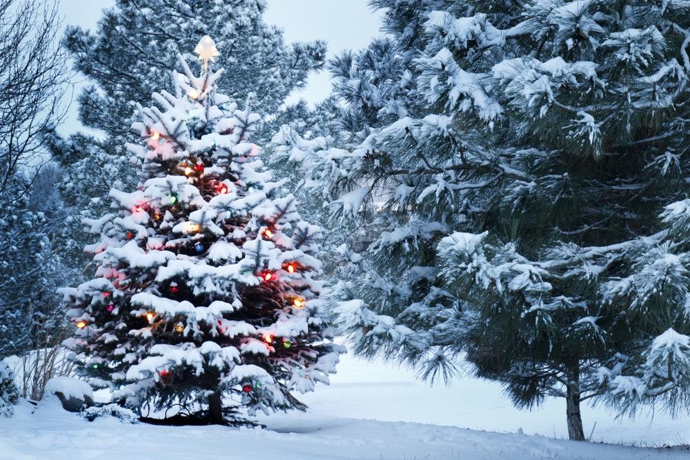 Három valódi karácsonyi csoda, ami a te szemedbe is könnyeket csal
