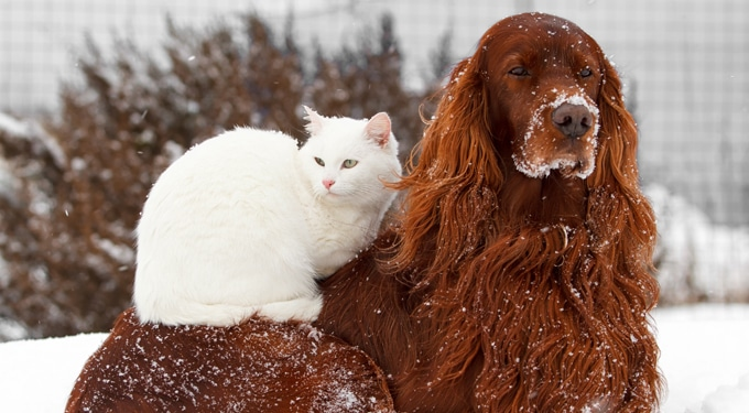 Házi kedvencek ezrei kerülhetnek az utcára! – Ezért ne ajándékozz felelőtlenül élő állatot!
