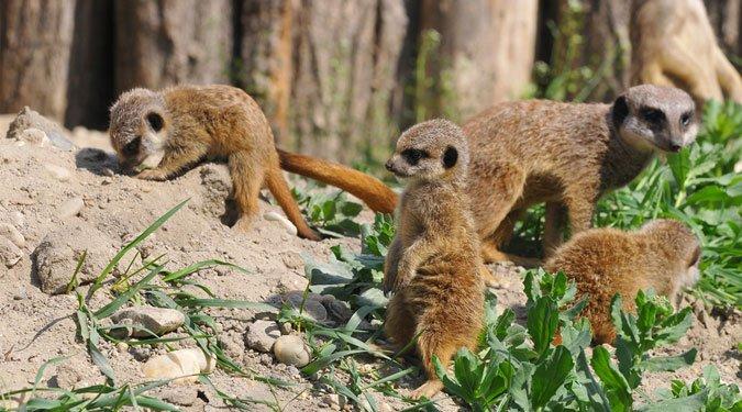 Hétvégi állatkerti, vadasparki túrák Magyarországon