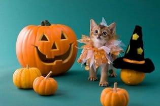 Halloween: Újra itt a borzongás ideje!