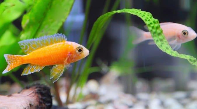 Hasznos tanácsok akvárium tulajdonosoknak
