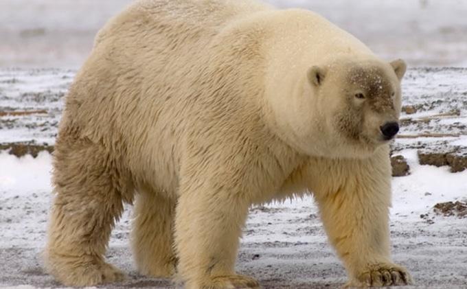 Hibrid állatfajoké a jövő? A tudósok szerint meglepő változásokat indíthat el a globális felmelegedés