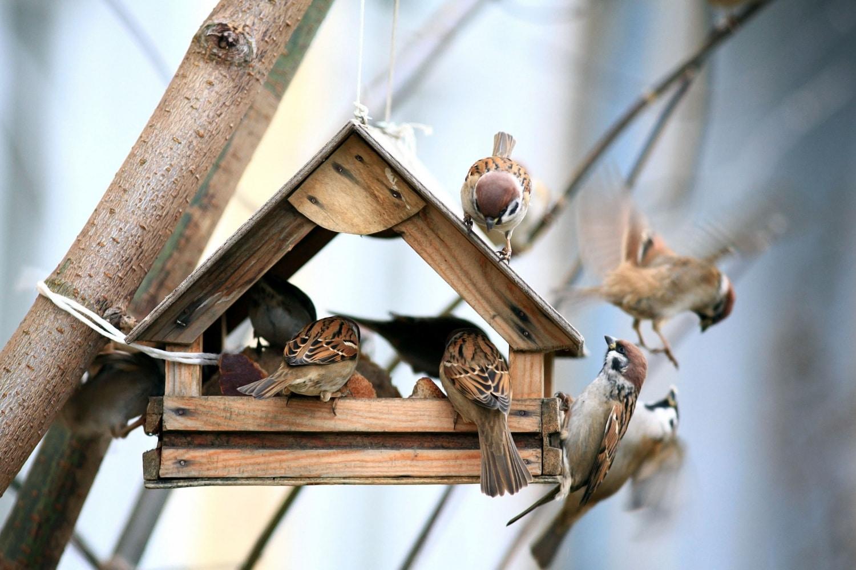 Ilyen szörnyű betegségeket terjeszthetnek a madarak