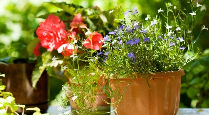 Készíts bio-tápoldatot az egészséges növényekért