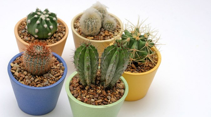 Kaktusztartási 1X1