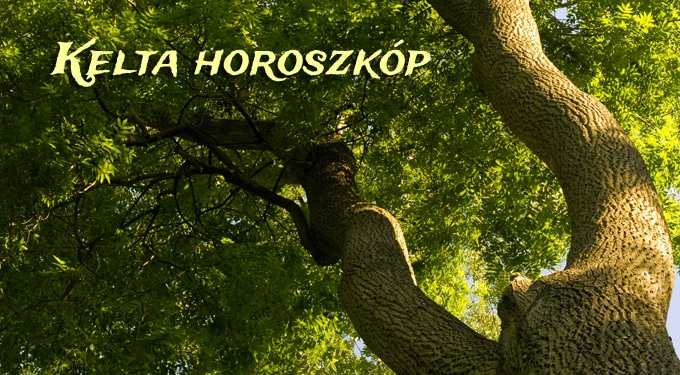 Kelta horoszkóp 2013