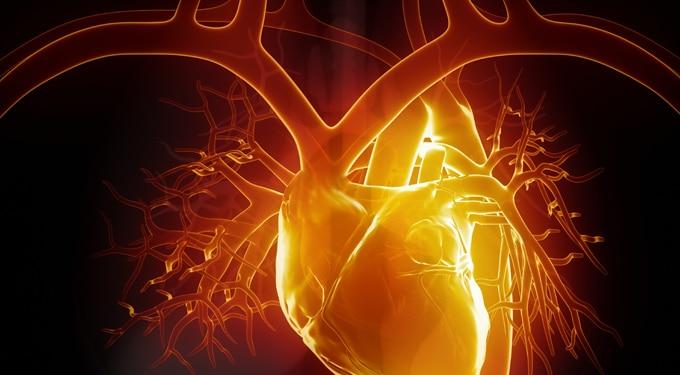Kiderült, hogy a szív a legintelligensebb szerv!