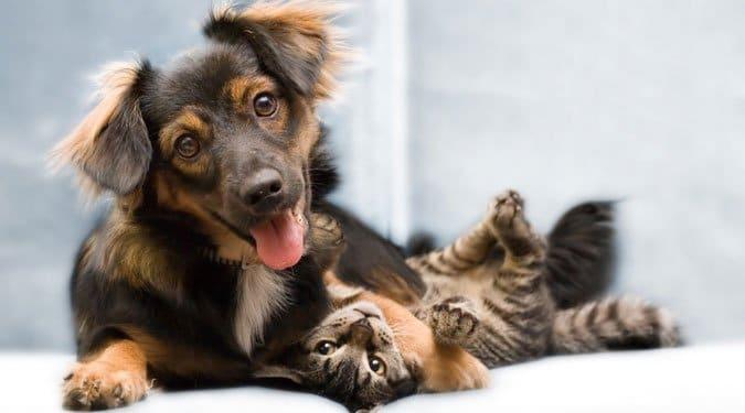 Kutyák és macskák közti vicces különbségek