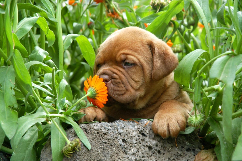Kutyások és kutyátlanok figyelem! Ezek a rátok vonatkozó illemszabályok