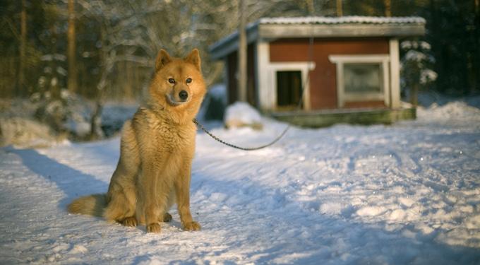 Kutya a hidegben? A téli állattartás szabályai