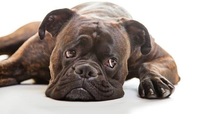 Kutyafajták és jellemző betegségeik