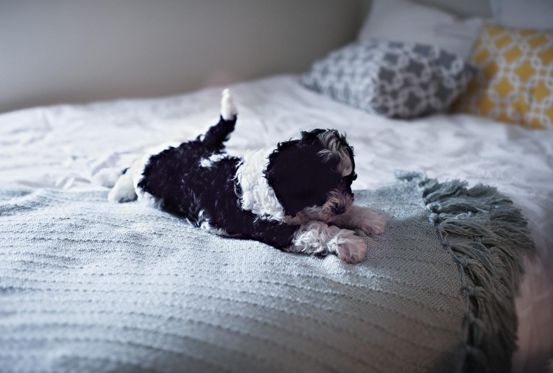 Legnépszerűbb keverék-kutyafajták – Ezekről nem is tudtad, hogy léteznek
