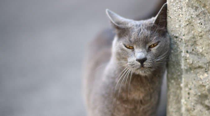 Lenyűgöző, hogy mi mindent meg tudnak jósolni a macskák