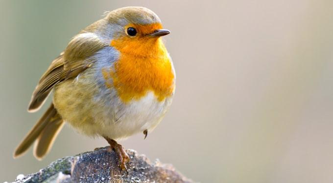 Ma van a madarak és fák napja ‒ Jelképek és idézetek