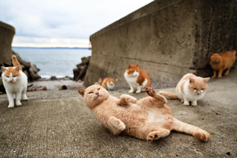 Macskák uralják a szigetet – ennél cukibbat ma nem fogsz látni