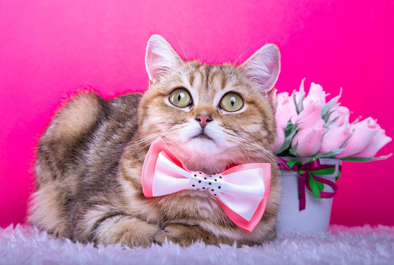 Megőrült a macskád? 6 fura cicaviselkedés magyarázata