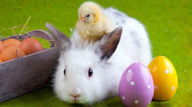 Miért épp húsvéti nyúl és hogyan képes tojást tojni?