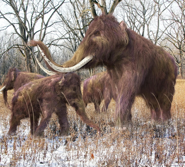 Mi is láthatunk mammutokat? Egy lépéssel közelebb a kihalt faj feltámasztásához
