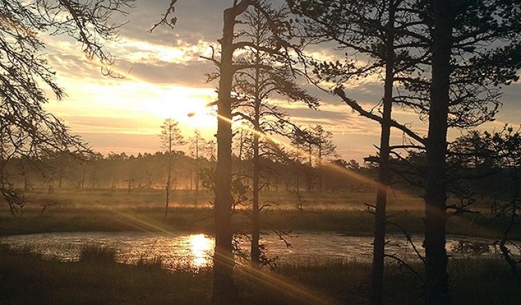Észak gyöngyszeme: fedezd fel Észtország kincseit!
