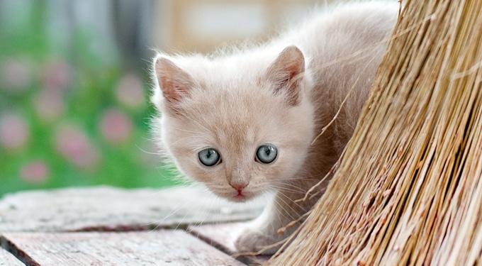 Mit kell tenned, ha kiscica jön a házhoz?
