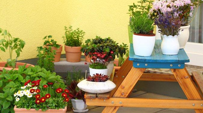 Növényeink ápolása a nyaralás alatt
