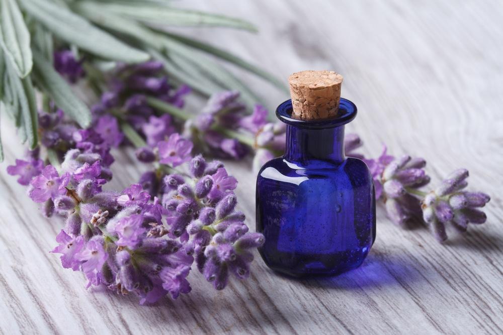 Növényi olajos testápoló házilag – Nézd meg, melyik illik a bőrtípusodhoz!