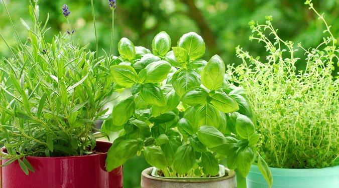 Otthoni fűszernövényes kert