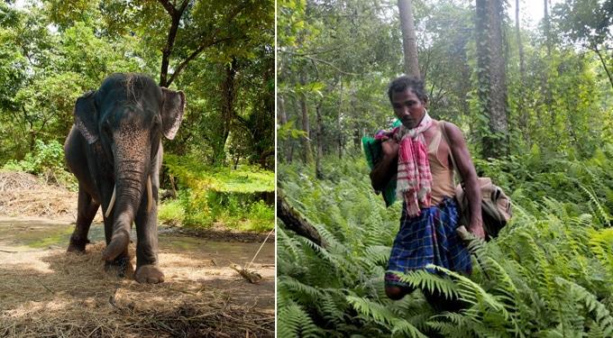 Példát vehetnénk az indiaiaktól! – Payeng erdője