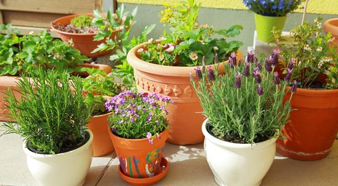Szobanövények téli ápolása: 7 tipp, hogy megéljék a tavaszt