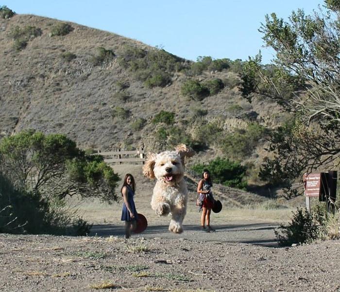 Tökéletes pillanatban elkapott fotók kutyákról