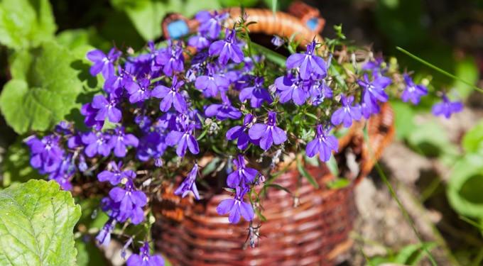 Tarka virágok erkélyre és ablakba