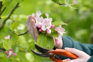 Tavaszi tennivalók a kertben
