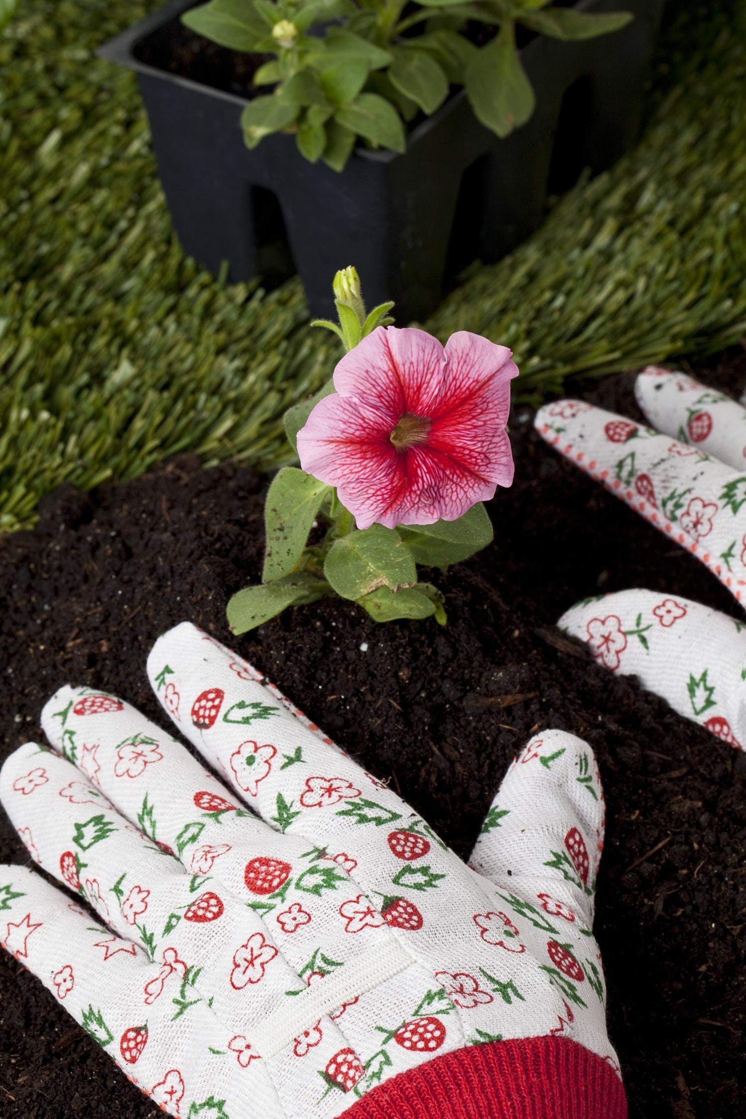 Tippek a szobanövények tavaszi átültetéséhez