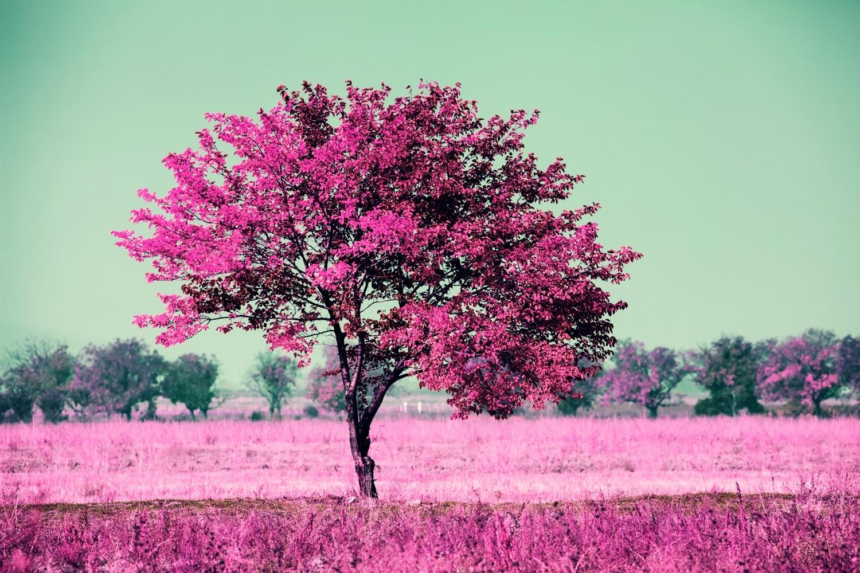 Válassz egy fát a képről és olvasd el, mit árul el a személyiségedről