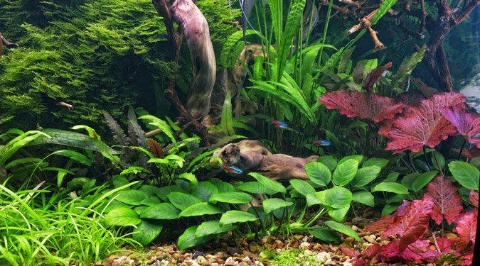 Víz alatti díszkertek