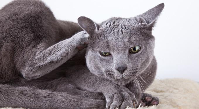 Vakarózik a cirmid? Ezek a macskák leggyakoribb betegségei