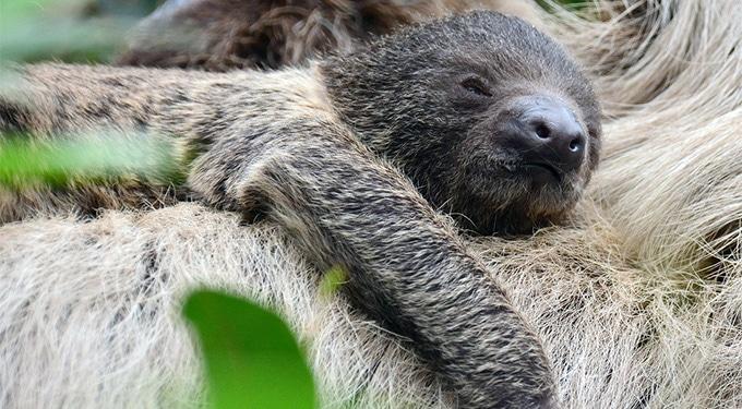 Veszélyesen cuki tartalom! Ezekkel a kicsikkel találkozhatsz most Budapesten – Baby boom az állatkertben