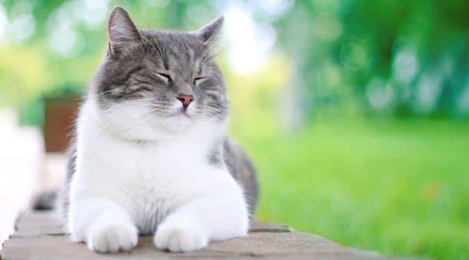 Vicces, de igaz idézetek a macskákról