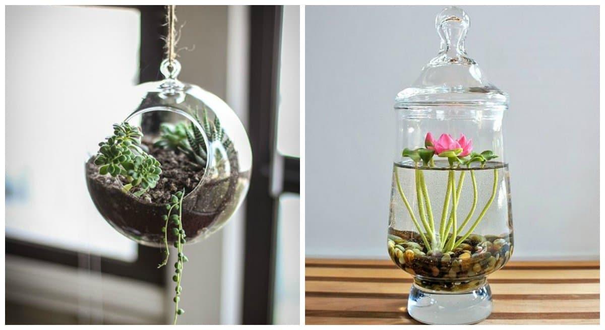 Zöld kert egy befőttesüvegben: lehetséges!