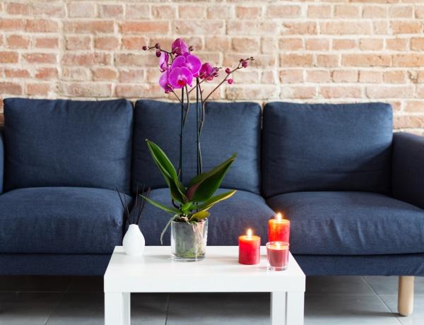 5 rejtett dolog, amiért nincs jó illat a lakásodban