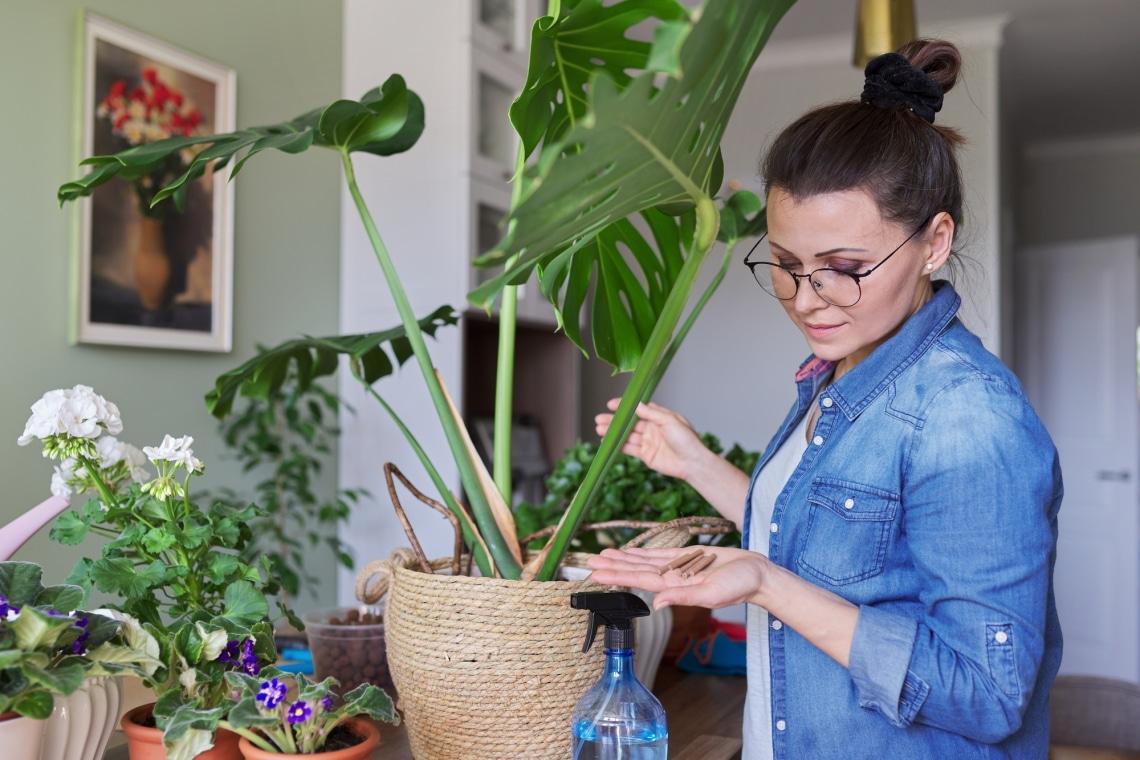 Növény gondozása