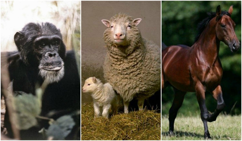 Hősök a természetben – Állatok, akik megváltoztatták a történelmet