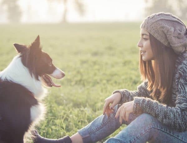 Állatot szeretnél örökbe fogadni? Íme a legfontosabb tudnivalók