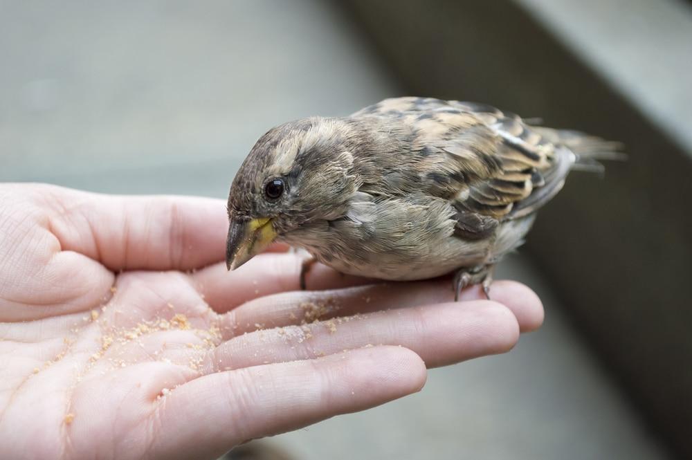 Árt vagy hasznos? 5 ok, ami miatt káros lehet a madáretetés