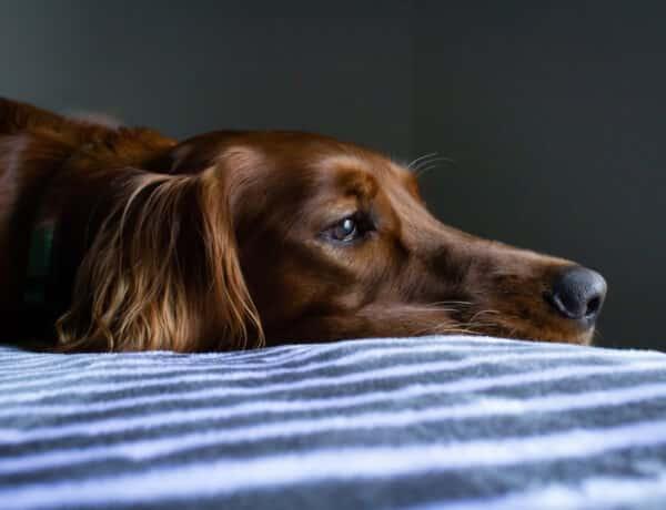 Érzi a kutyád, ha stresszes vagy, és ez neki sem jó
