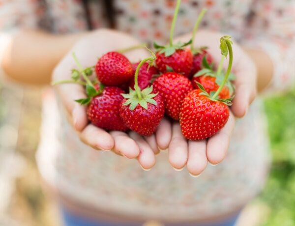 Így edd a pirosan mosolygó, édes epret