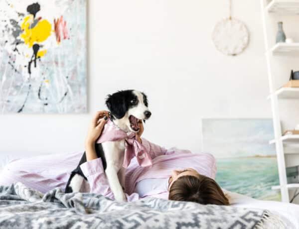 4 kérdés a kutyákkal kapcsolatban, amire minden gazdinak tudnia kell a választ