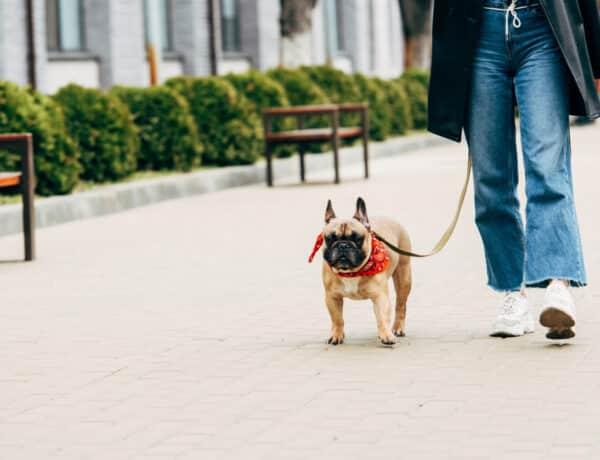 4 kutyasétáltató szabály, amit sajnos csak kevesen tartanak be